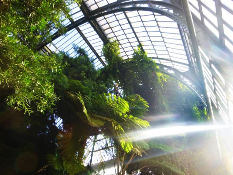Opération «serre tropicale» au Jardin des Plantes, Paris