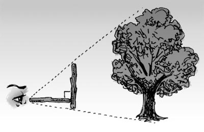 Mesurer la hauteur d'un arbre