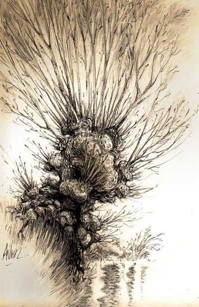 Trogne, arbre têtard : une longue histoire des arbres…
