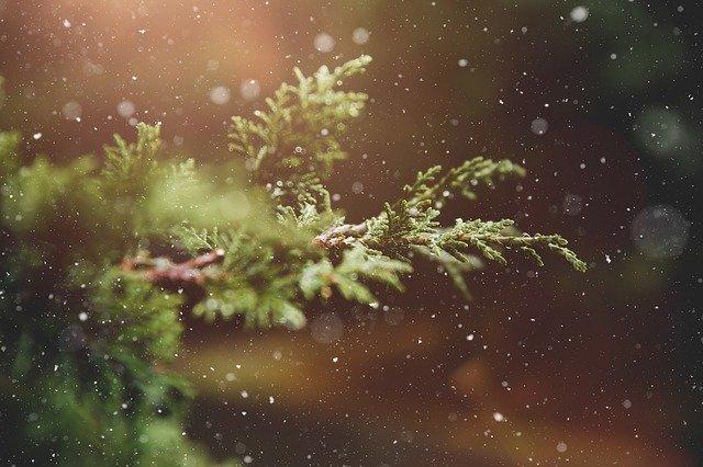 Noël : vrai sapin ou artificiel ?